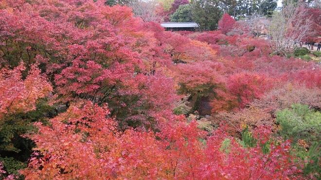 東福寺「通天橋」から見た紅葉(2)