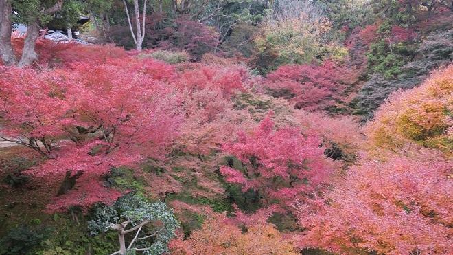 東福寺「通天橋」から見た紅葉(3)