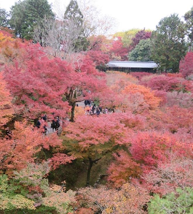 東福寺「通天橋」から見た紅葉(4)
