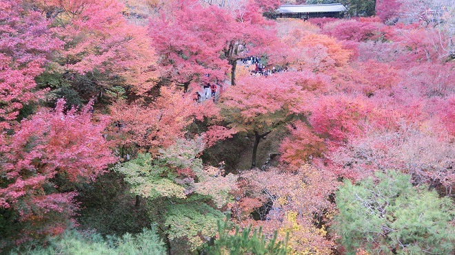 東福寺「通天橋」から見た紅葉(5)