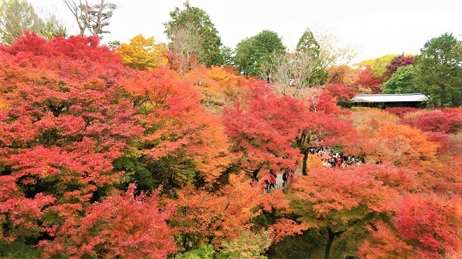 東福寺「通天橋」から見た紅葉(6)