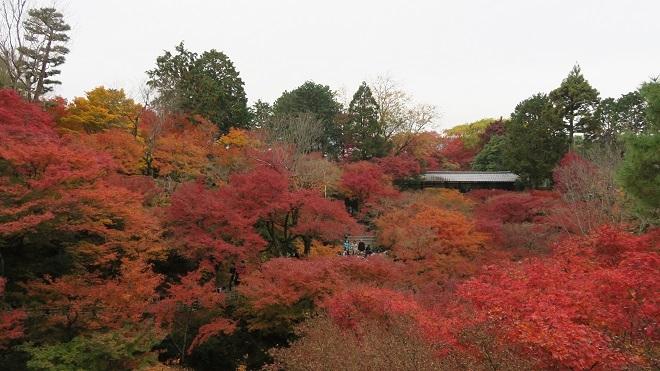 東福寺「通天橋」から見た紅葉(7)