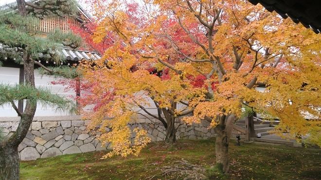 東福寺「通天橋」から見た紅葉(8)