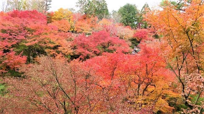 東福寺「通天橋」から見た紅葉(10)