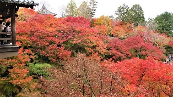 東福寺「通天橋」から見た紅葉(11)