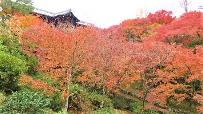 東福寺境内の紅葉(6)