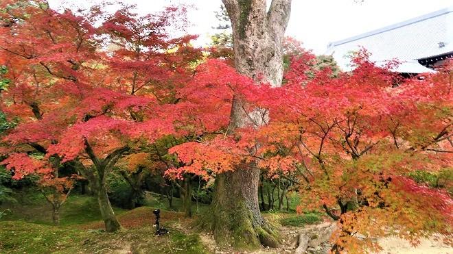 東福寺境内の紅葉(7)