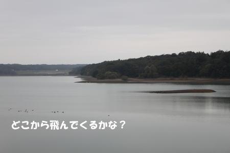 2019-11-03_3.jpg