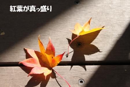 2019_11_11_7.jpg