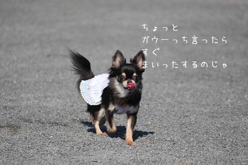IMG_4136.jpg