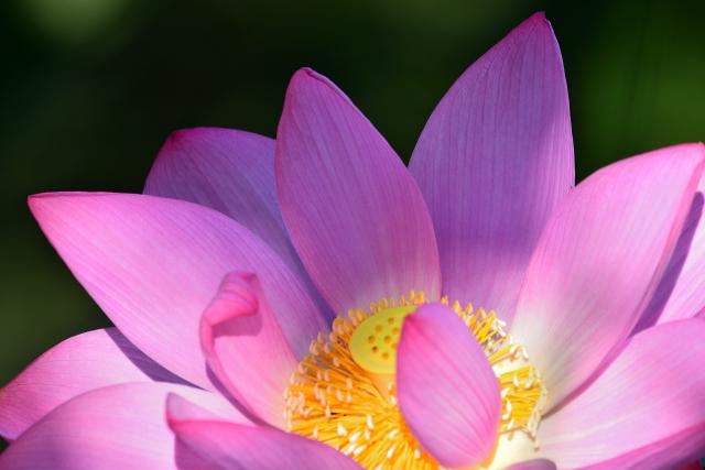 梅雨の花々(3)