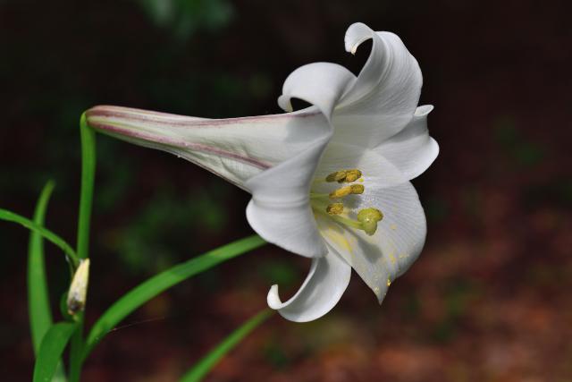 梅雨の花々(1)