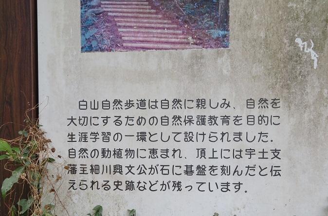 白IMG_2134