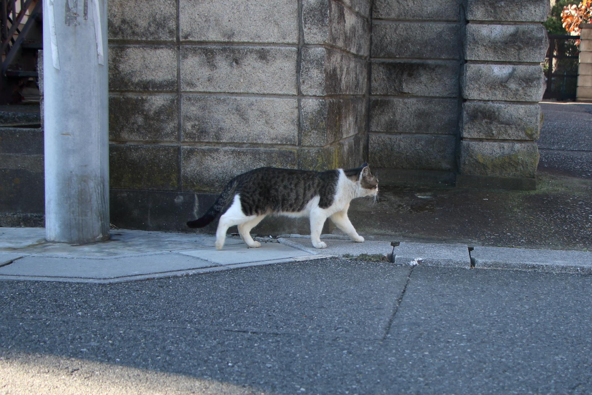 初めての猫