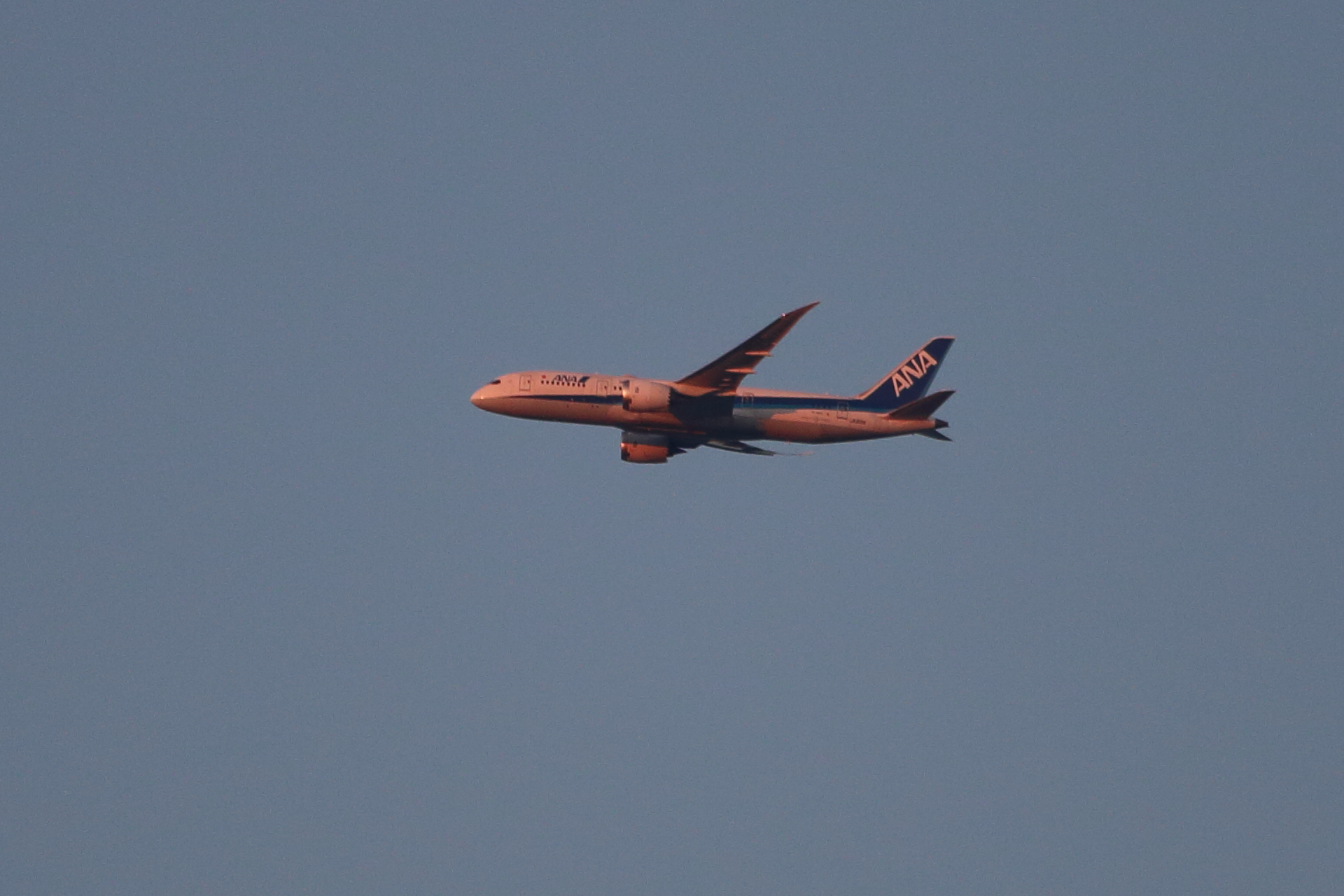 今日の飛行機