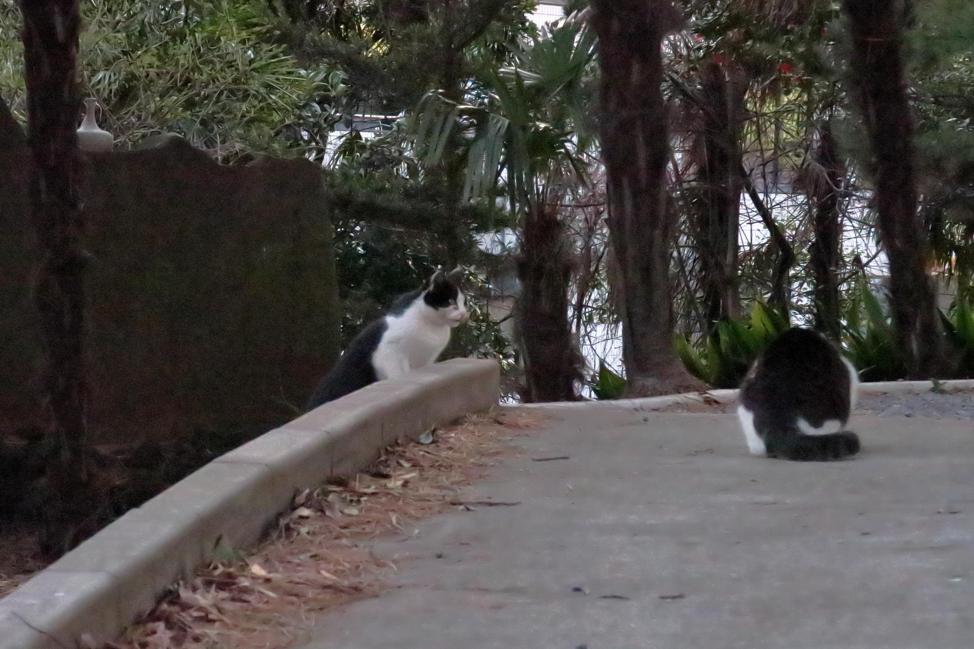 神社の猫たち