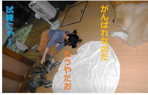 s-200711-4.jpg