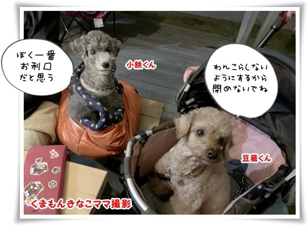 IMG_3597_1.jpg