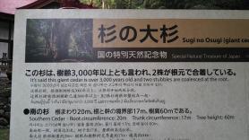 杉の大杉 説明