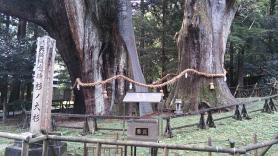 国の特別天然記念物 杉の大杉