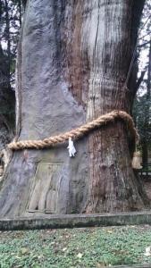 杉の大杉 幹にドア