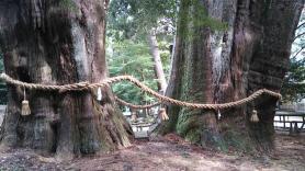 杉の大杉 巨大な幹