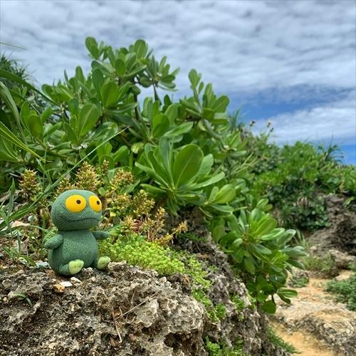 ゆうブログケロブログ沖縄2020 (75)