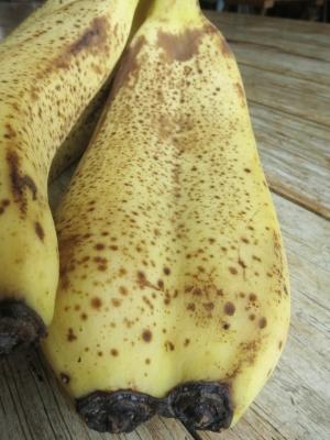 200820-36=結合バナナ aPBR