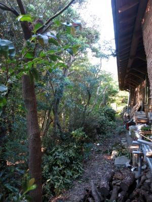 200830-2=枕流庵KUR側立木枝伐採終了fm庵前庭