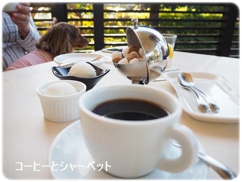コーヒーとシャーベット