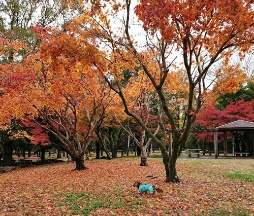 19-11-24-13-42-51-886_photo.jpg