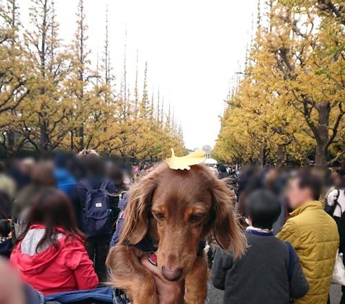 19-12-01-13-36-37-039_photo.jpg