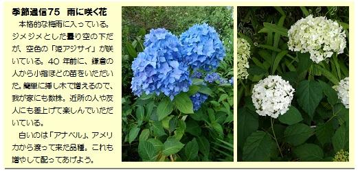 季節通信75雨に咲く花