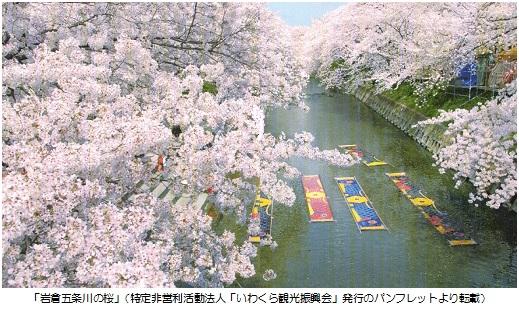 五条川桜A