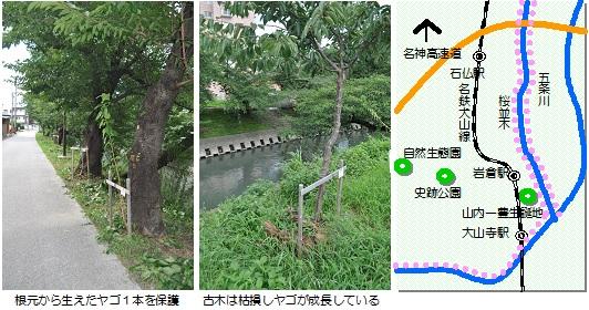 五条川桜マップ