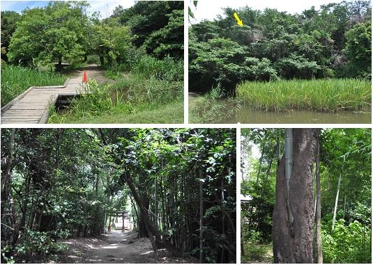 岩倉自然生態園