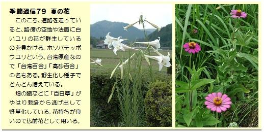 季節通信79夏の花