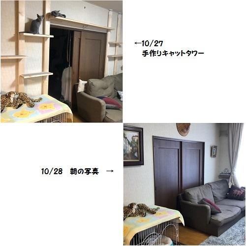 C20191027IMG_3807.jpg