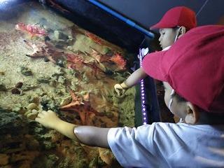 水族館でヒトデに触る