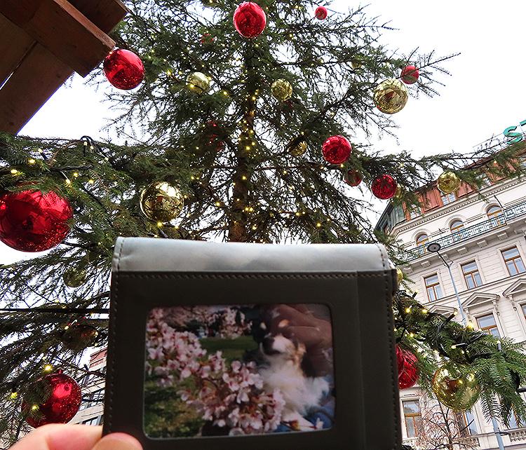 プラハのツリーA新市街ヴァーツラフ通り博物館