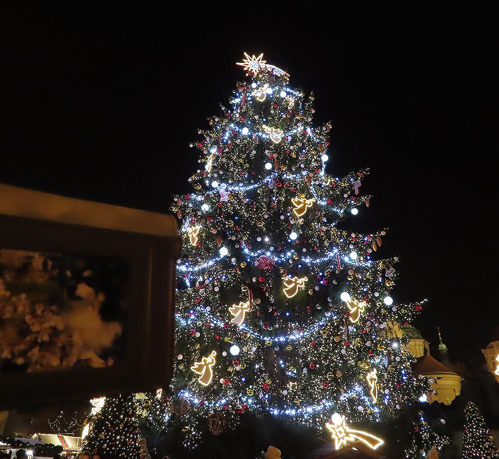 プラハのツリーB