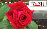 C-bara10_20200306080939c3e.jpg