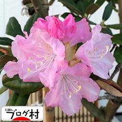 shakunage01_20191220075503130.jpg