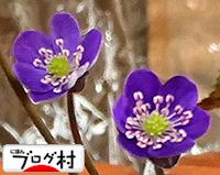 yukiwari2.jpg