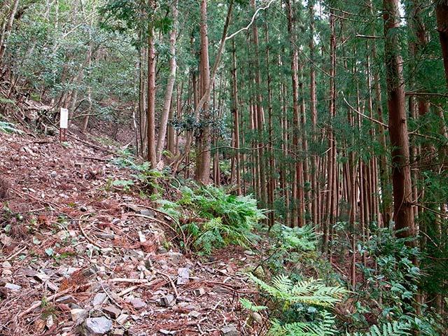 八草の滝07