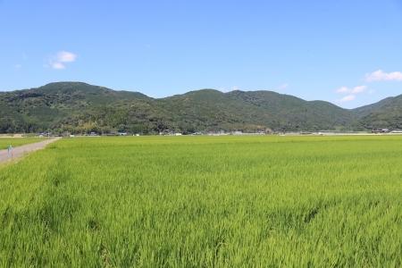 白石平野(5)
