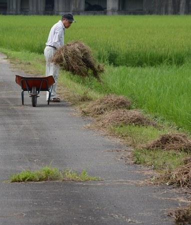 200804干草 (4)