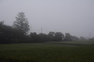200805霧の朝 (1)