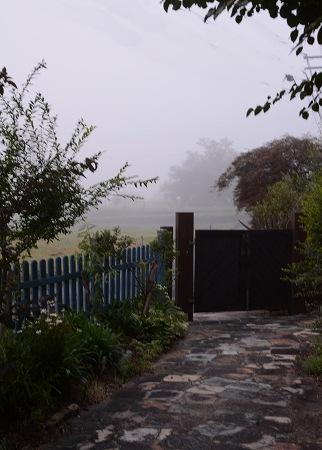 200805霧の朝 (2)