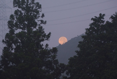 200805霧の朝 (5)